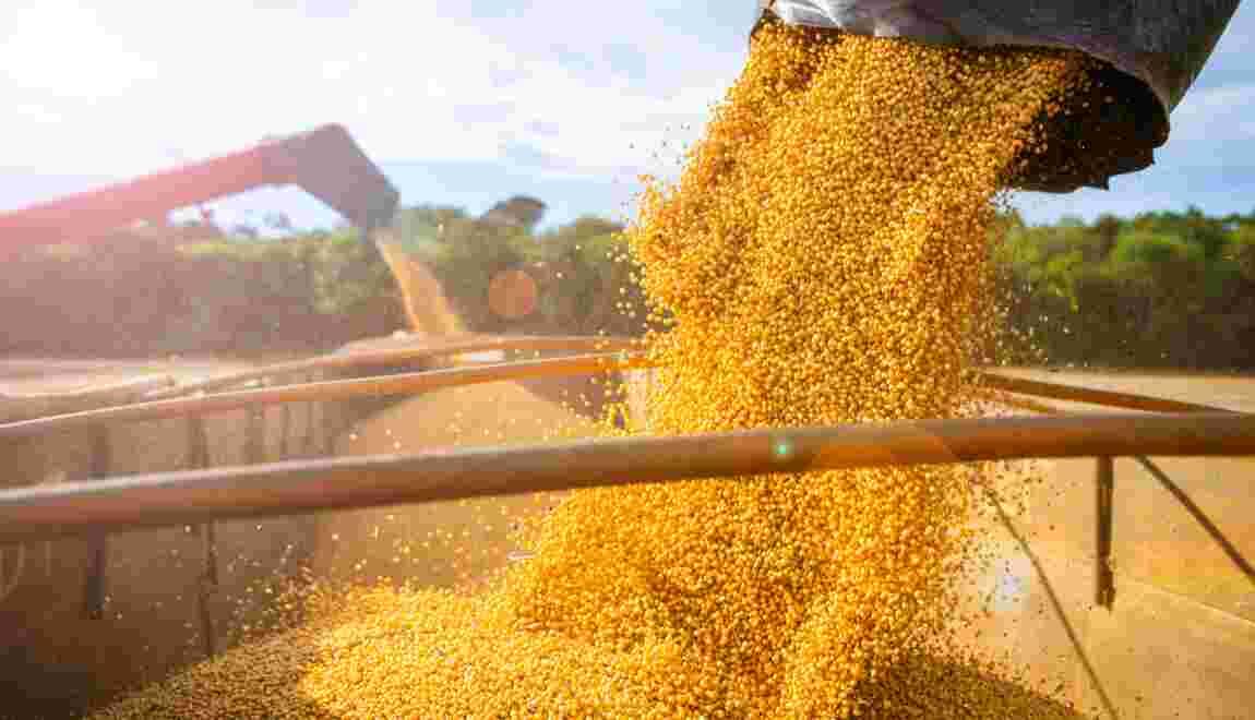 Les entreprises françaises appelées à réagir contre le soja, cause majeure de déforestation en Amérique latine