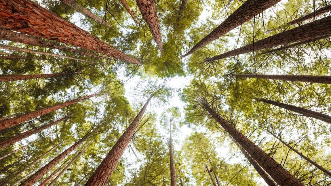 La diversité des forêts pourrait les protéger des insectes ravageurs et des maladies