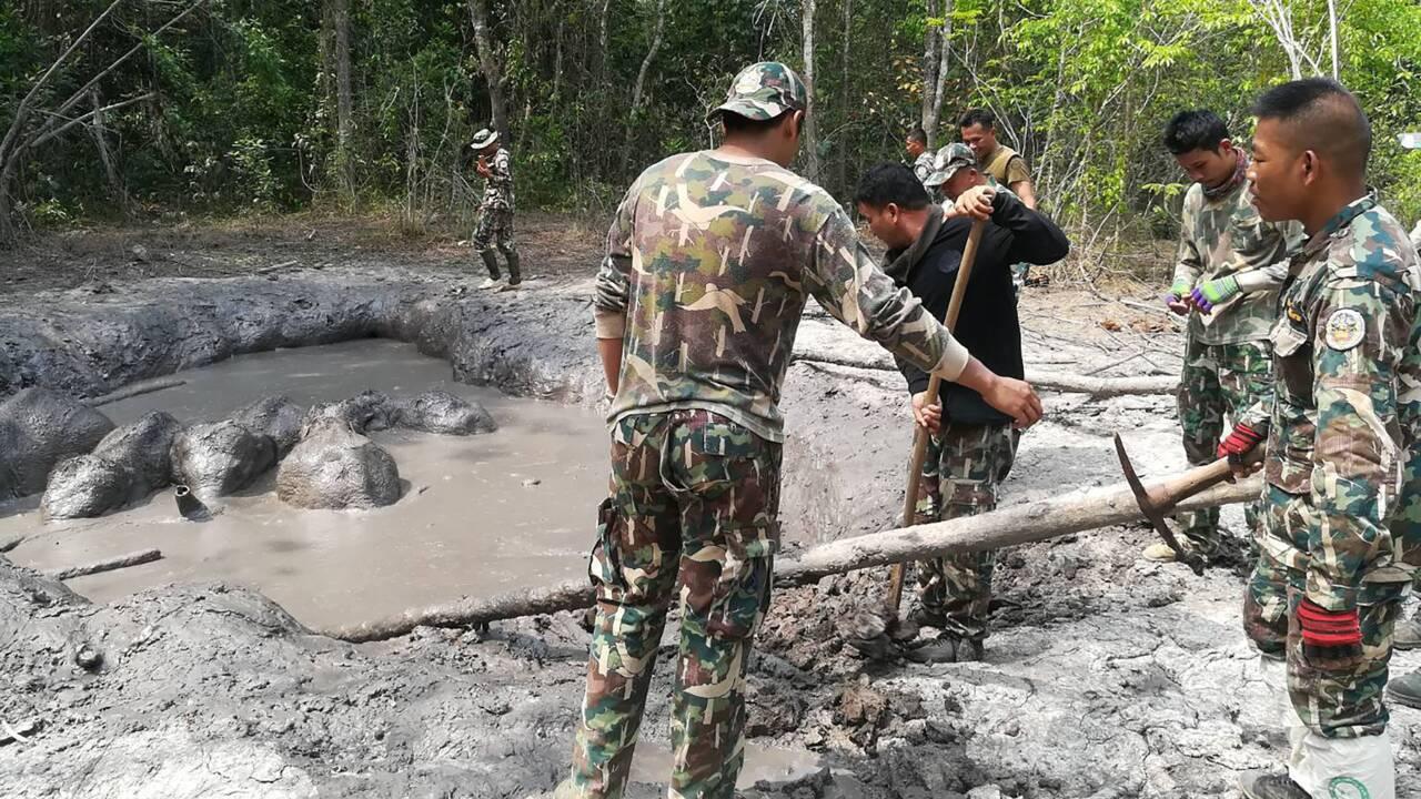 Thaïlande : des bébés éléphants secourus par des gardes forestiers