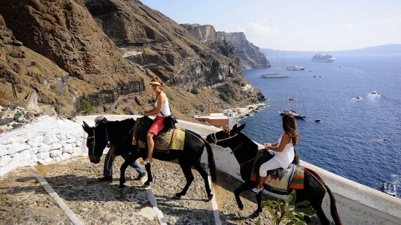 A Santorin, une campagne appelle à veiller au bien-être des ânes victimes du tourisme de masse