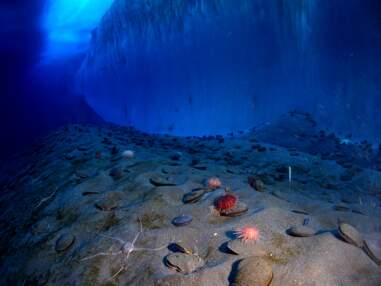 A la découverte des mondes sous-marins avec l'exposition Océan