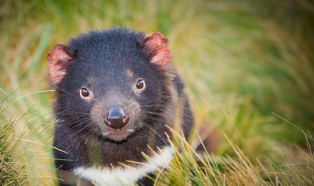 Vendre son âme au diable… de Tasmanie