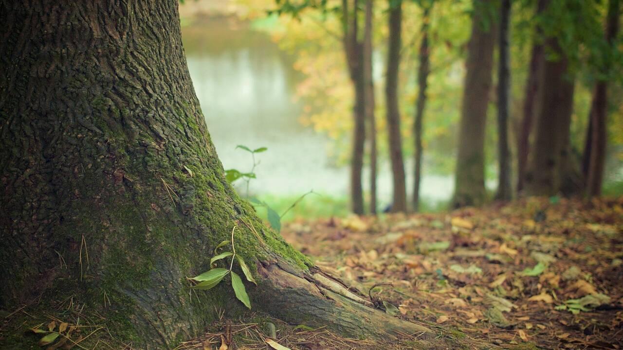 Grâce à la reforestation, les arbres de l'hémisphère nord absorbent de plus en plus de CO2