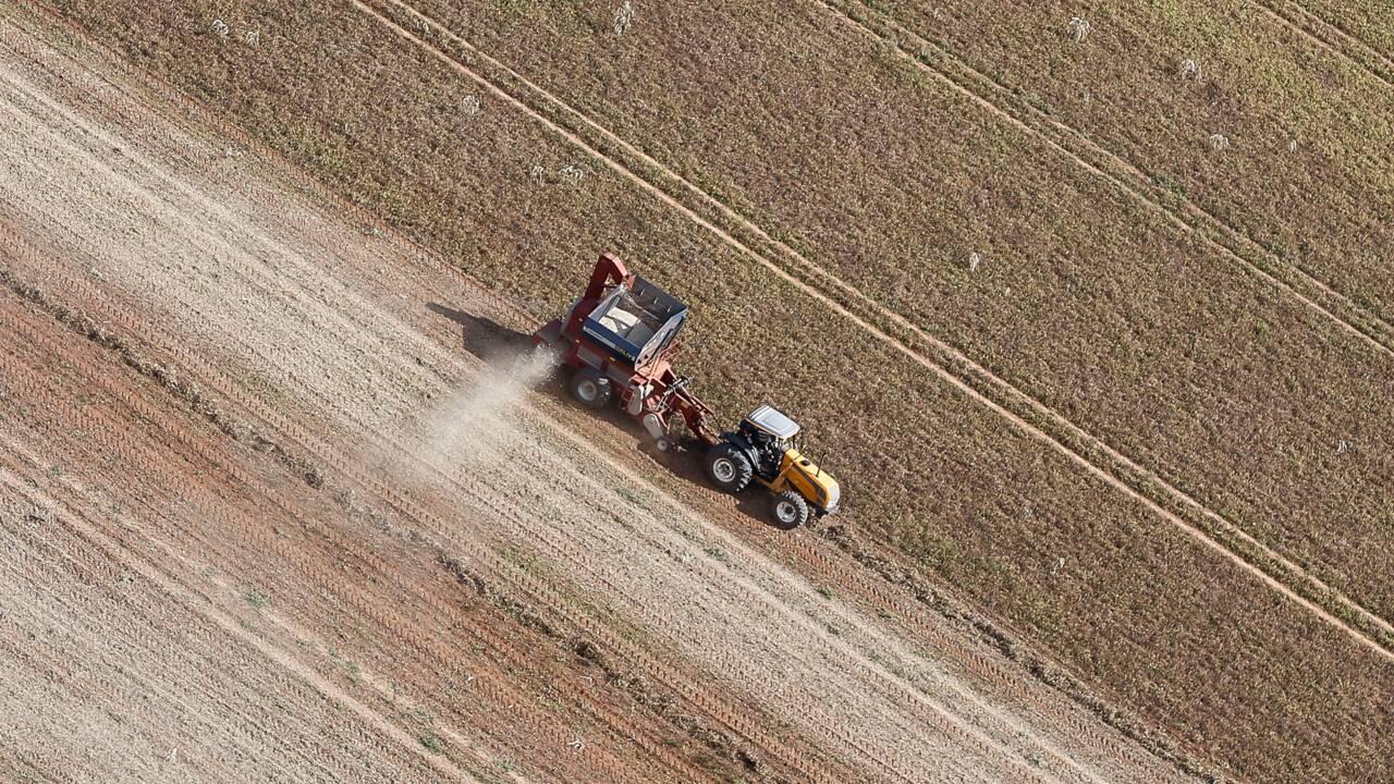 Au Brésil, les pesticides ont de beaux jours devant eux