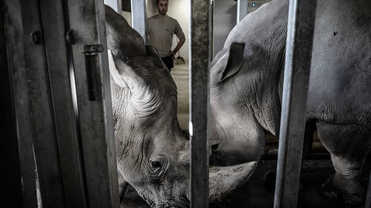 Des jeux et de l'entraînement pour les animaux du zoo de Paris