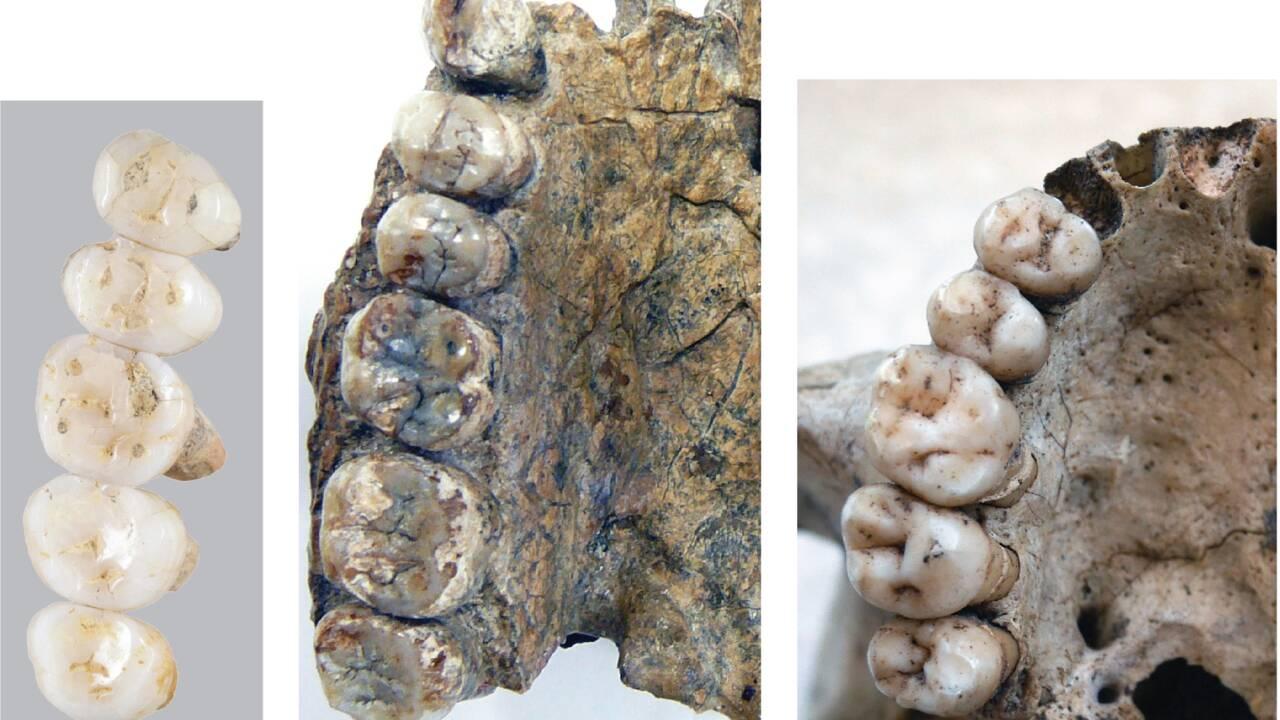 Des chercheurs ont fait la découverte d'une espèce humaine inconnue vieille de 50 000 ans