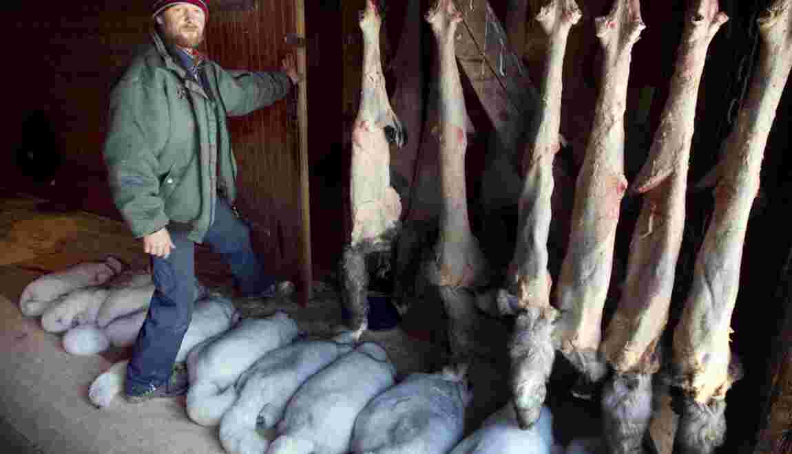 Fourrure: la Norvège va interdire les élevages d'ici 2025