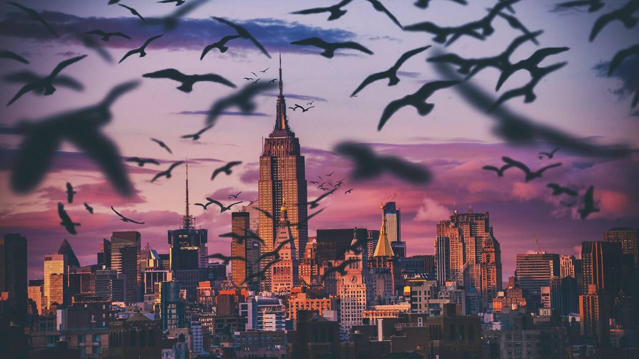 Aux Etats-Unis, plus de 600 millions d'oiseaux meurent chaque année à cause des gratte-ciels