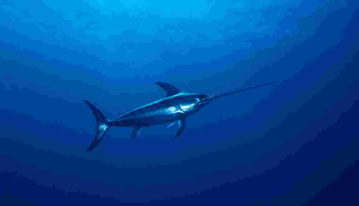 À cause des gaz à effet de serre, les poissons qui chassent en eaux profondes sont privés d'oxygène
