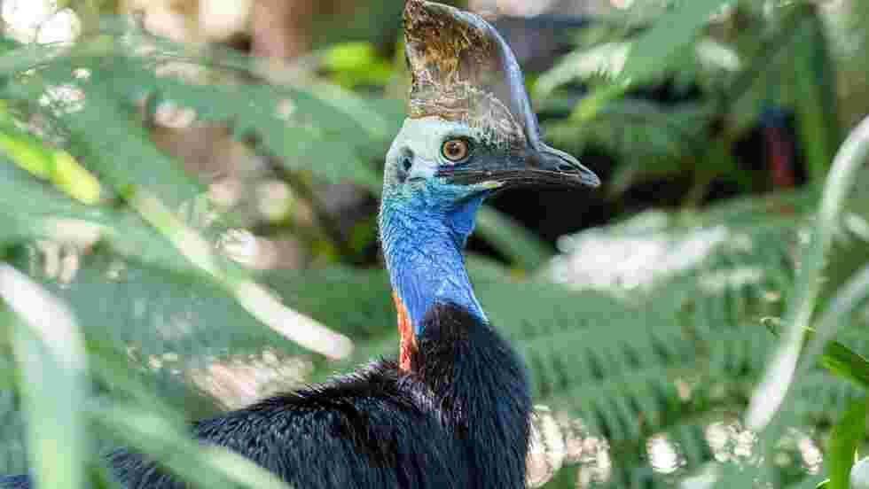 """L'oiseau """"le plus dangereux au monde"""" aurait tué un homme en Floride"""
