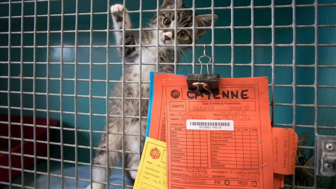 Animaux de compagnie: les chiens souvent achetés, les chats trouvés ou donnés