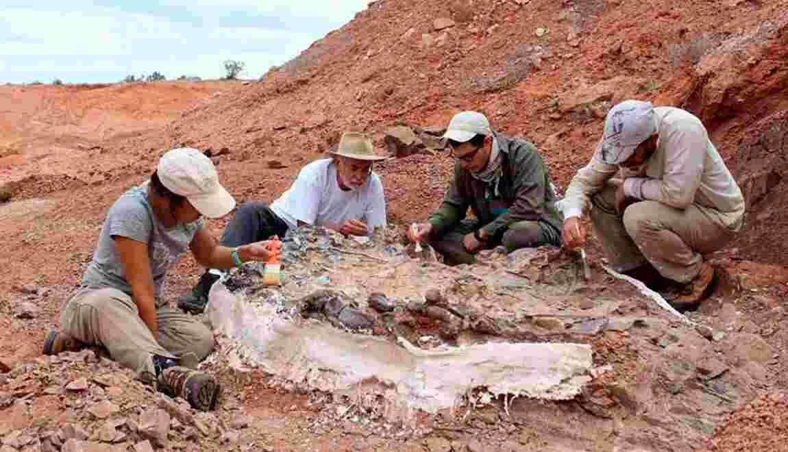 Un cimetière de fossiles vieux de 220 millions d'années découvert en Argentine