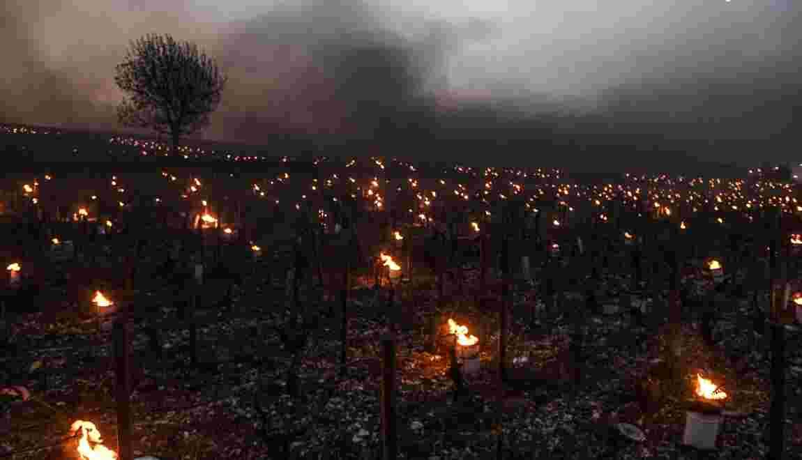 Premier coup de gel de printemps dans les vignobles français