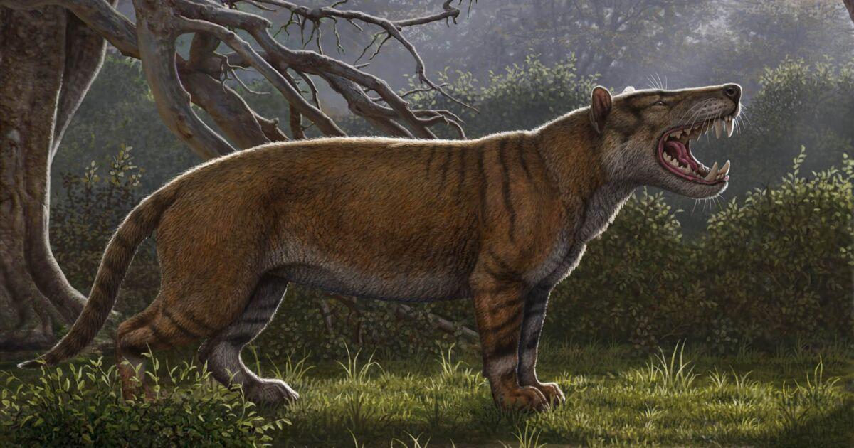 Les ossements de l'un des plus grands mammifères carnivores identifiés au Kenya