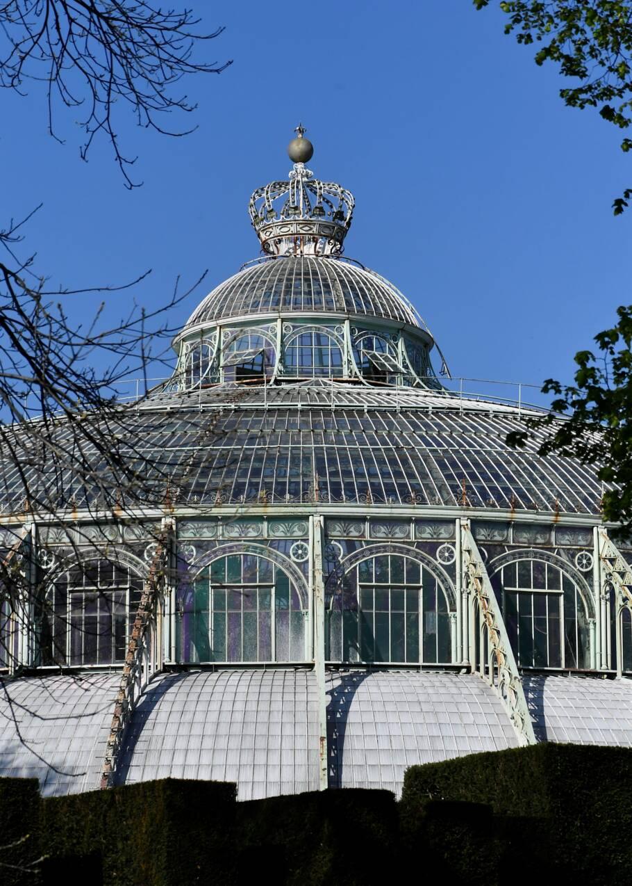 Belgique : les serres royales de Laeken ouvertes pour le printemps