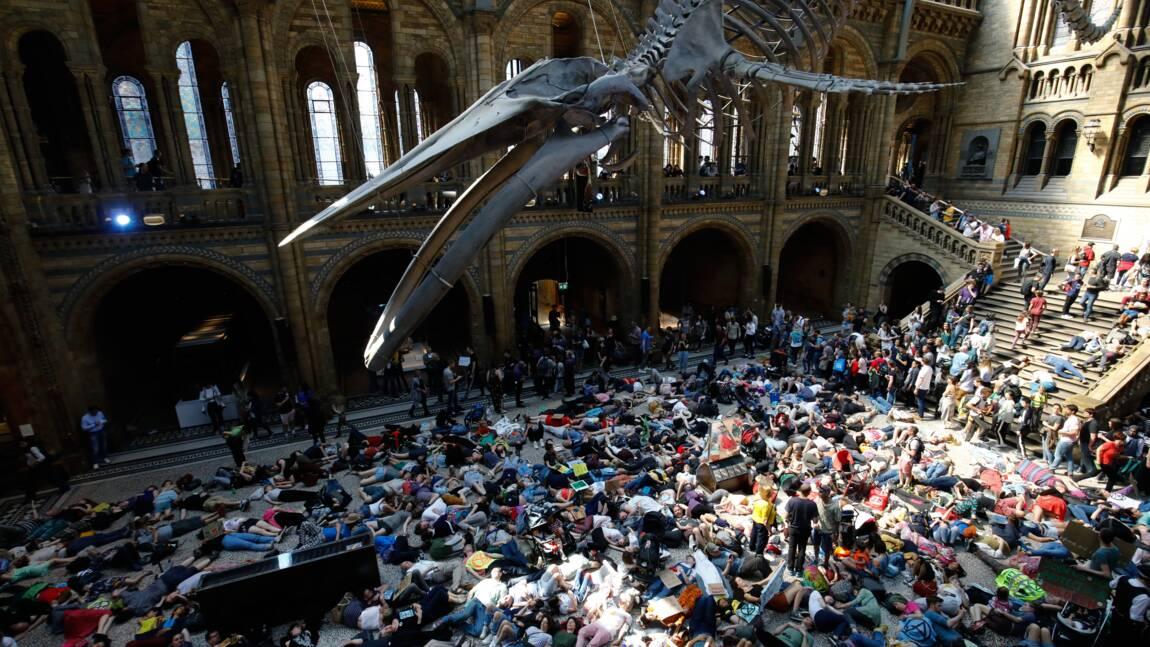 """Inaction climatique: """"die-in"""" d'Extinction Rebellion dans un musée londonien"""