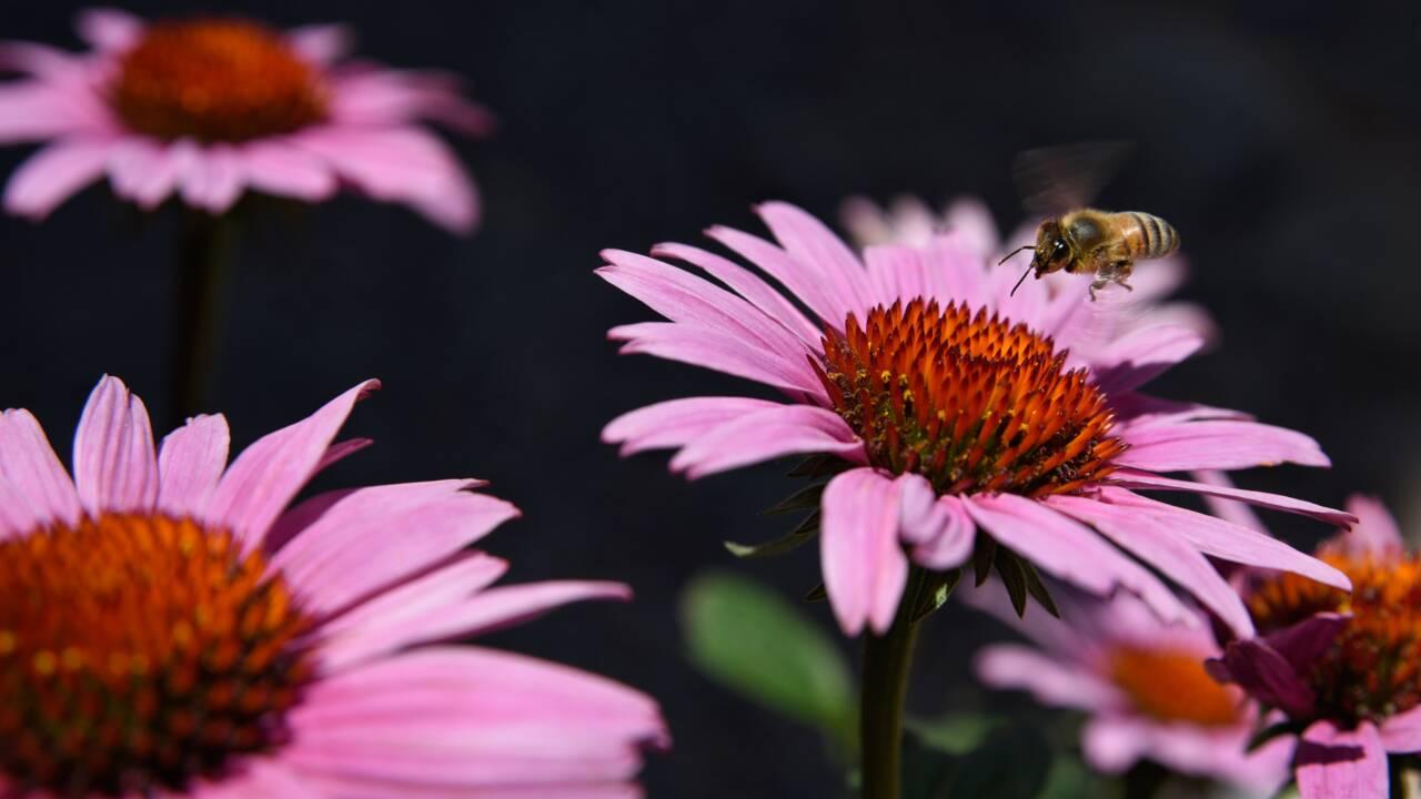 """""""On a tout le temps besoin de la biodiversité pour aider au fonctionnement des sociétés humaines"""""""