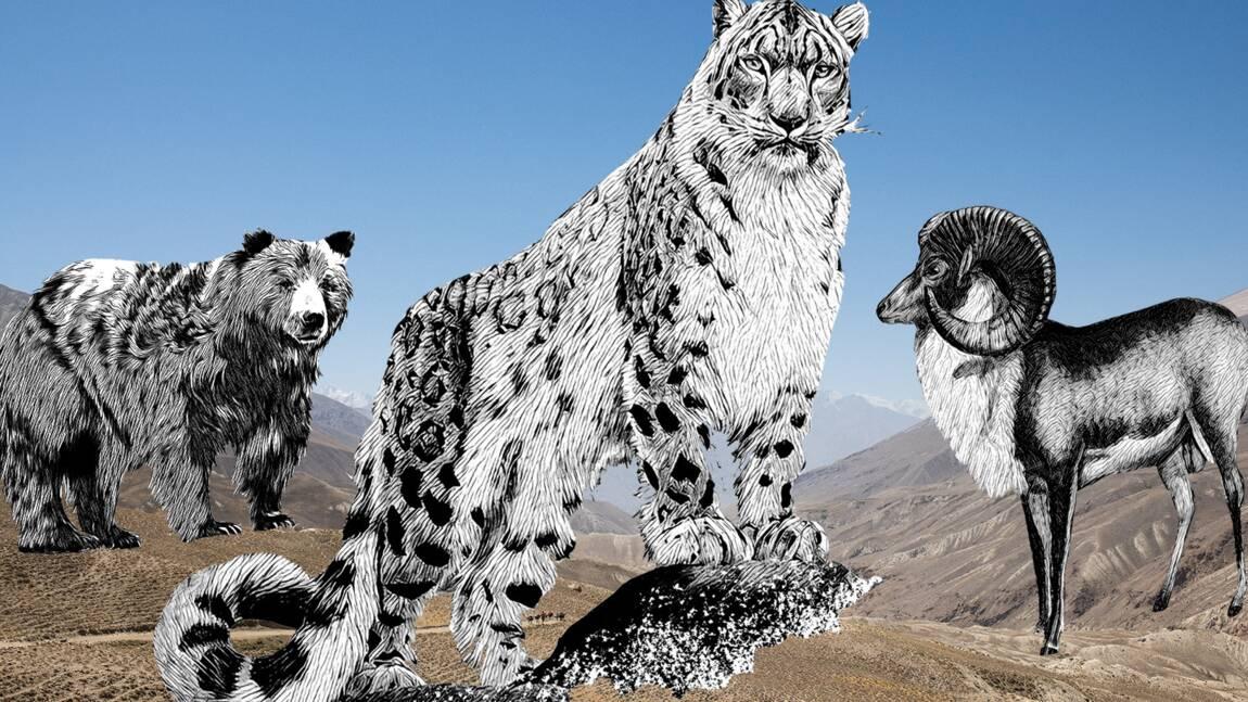 Mouflons de Marco Polo, léopards des neiges... La vallée du Wakhan, une arche de Noé sur le toit du monde
