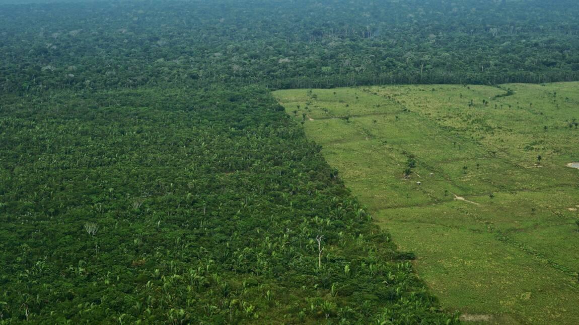 Brésil: Opération coup de poing contre la déforestation
