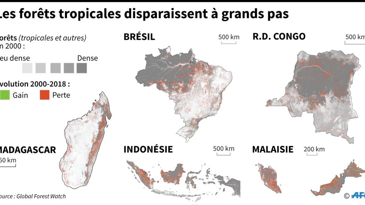 12 millions d'hectares de forêts tropicales détruits en 2018, l'équivalent du Nicaragua