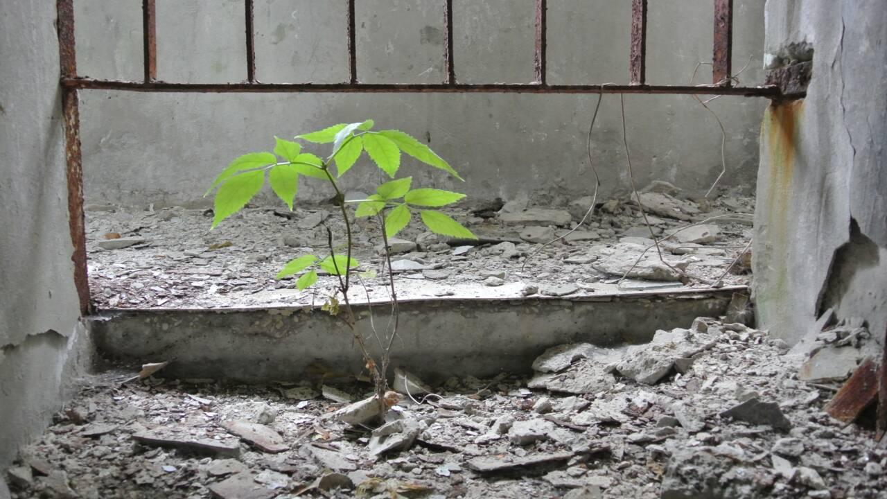 Tchernobyl : plus de 30 ans après, la zone d'exclusion perpétue le souvenir de la catastrophe