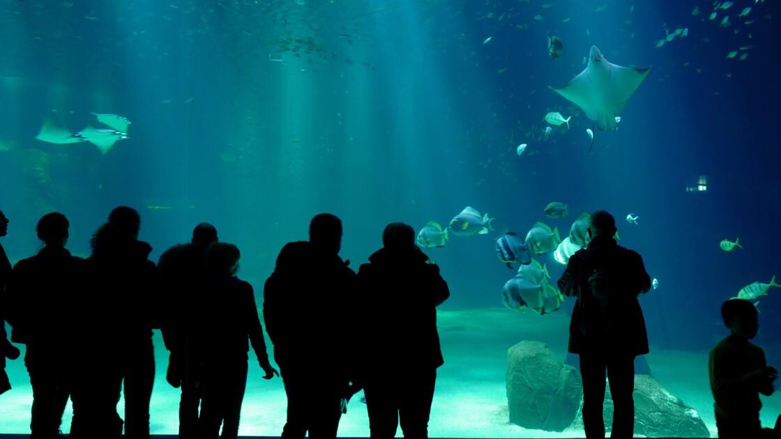 Boulogne-sur-mer: tous les requins-marteaux sont morts à Nausicaà