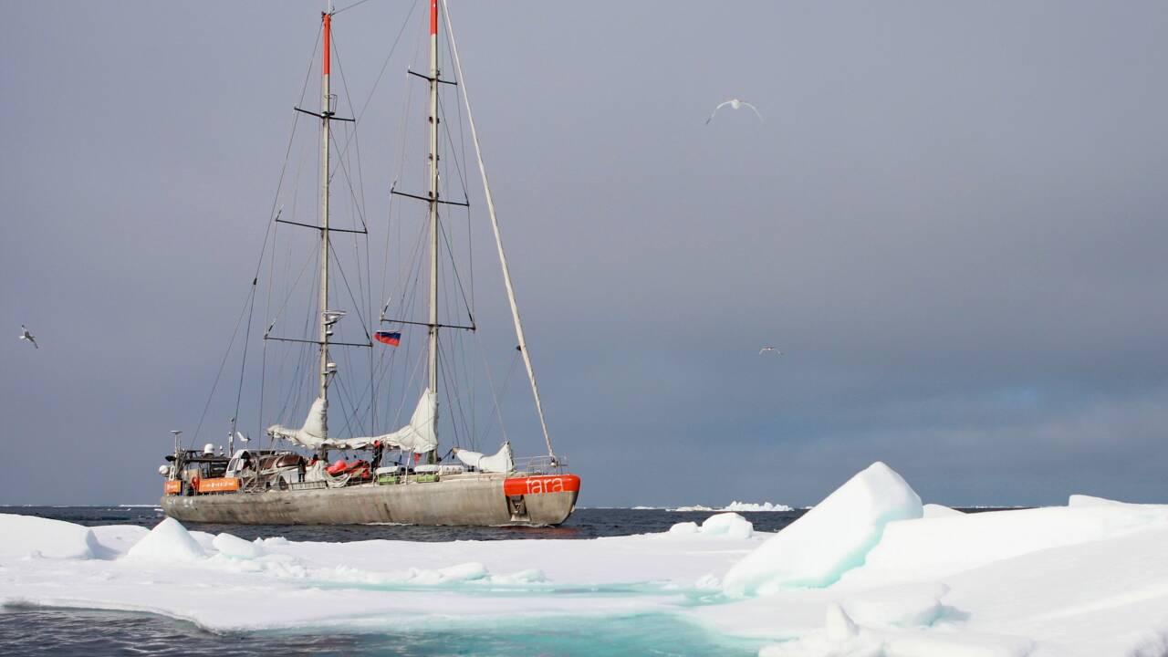 """L'océan Arctique, une """"pépinière"""" de virus marins"""