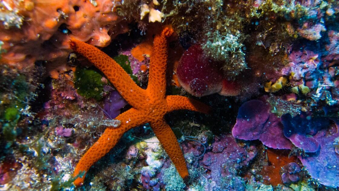 Insectes, arbres ou coraux, des espèces vitales pour l'homme