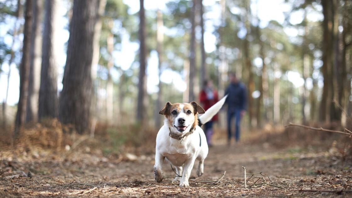 L'ONF rappelle l'importance de garder son chien en laisse lors des promenades en forêt