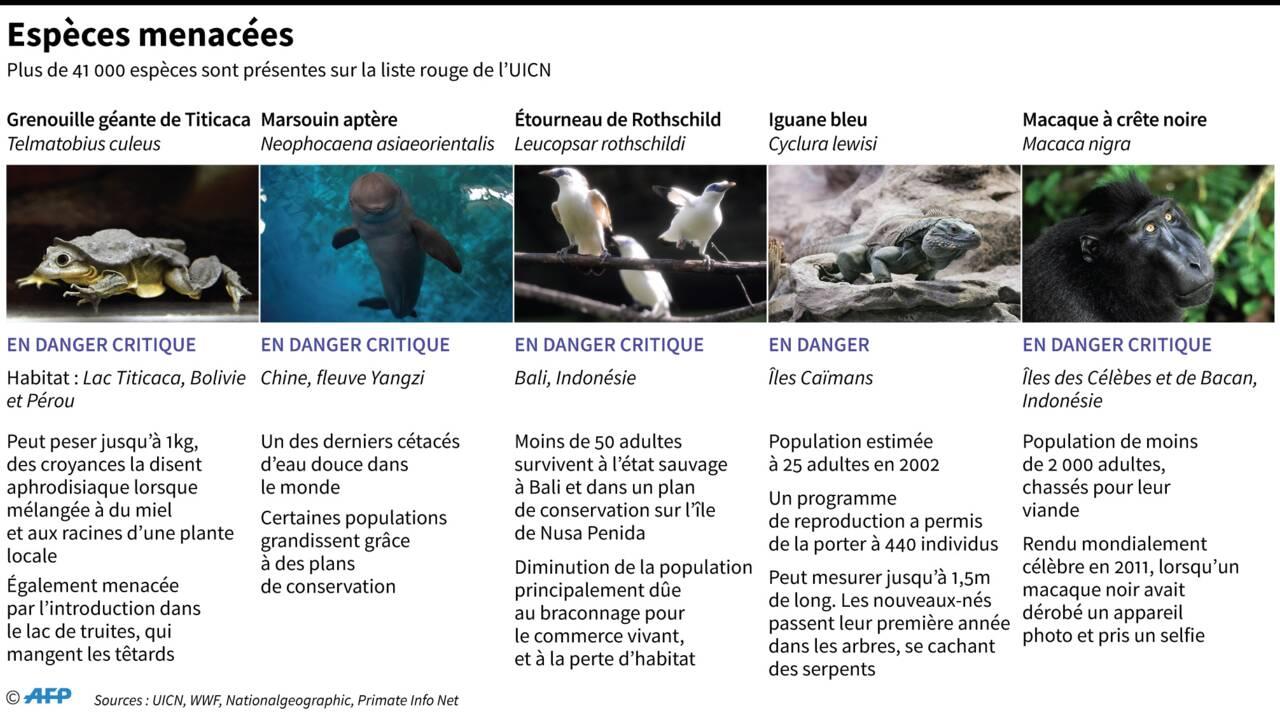 """Les principales """"extinctions de masse"""" sur la Terre"""