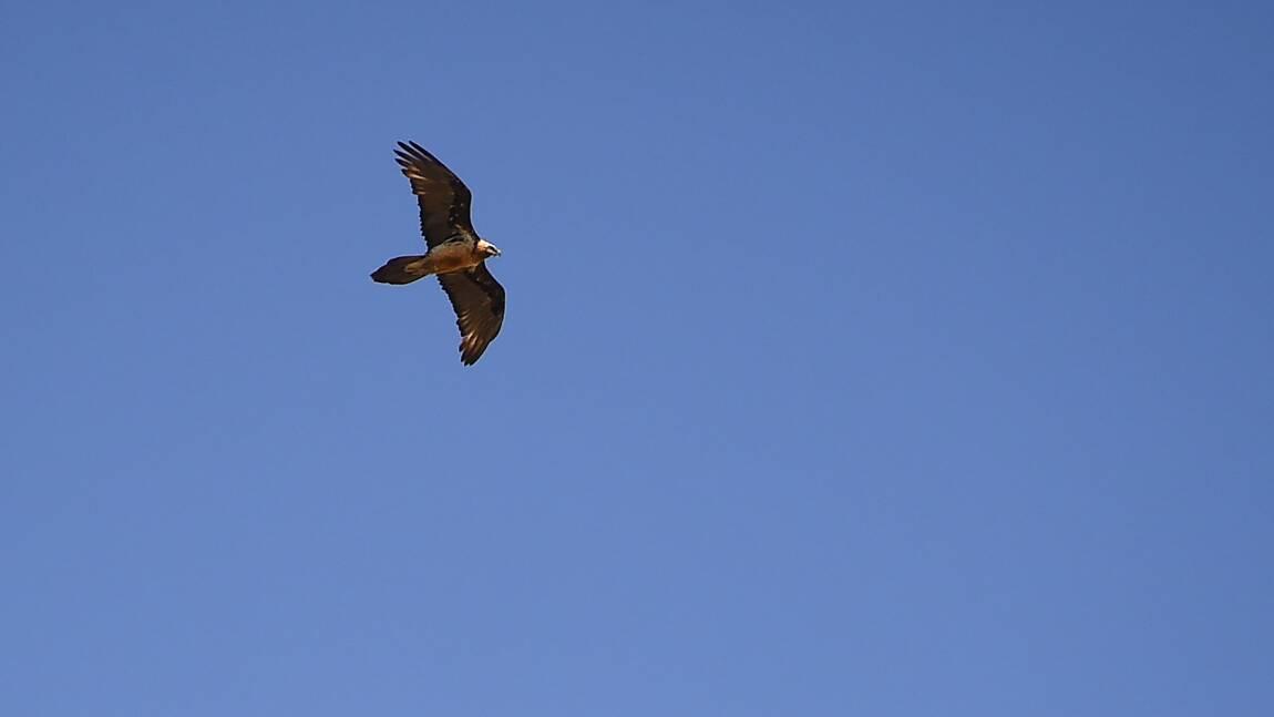 Bilan a minima pour le plan national sur la biodiversité