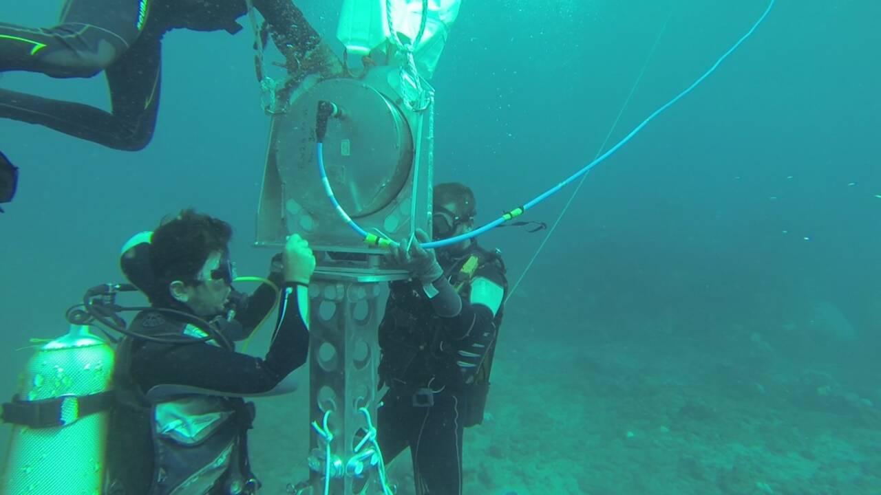 À La Réunion, on teste un détecteur de requins pour éviter les attaques