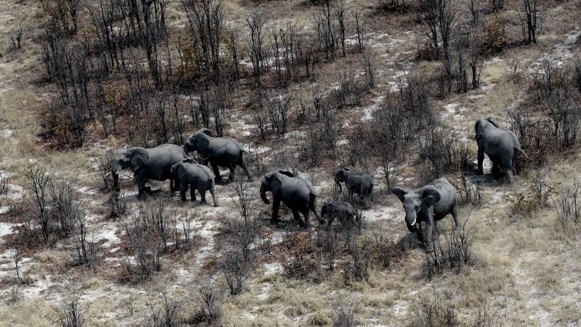 L'Afrique australe pour un allègement de l'interdiction du commerce de l'ivoire