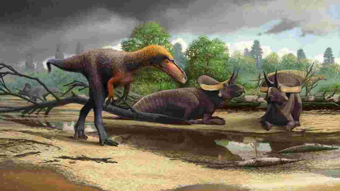 """Un """"mini"""" tyrannosaure découvert aux Etats-Unis éclaire l'origine de ces dinosaures"""