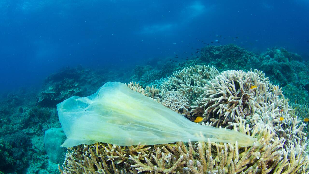 Un plongeur découvre 4 nouvelles espèces à 11 km de profondeur… mais aussi des déchets plastiques