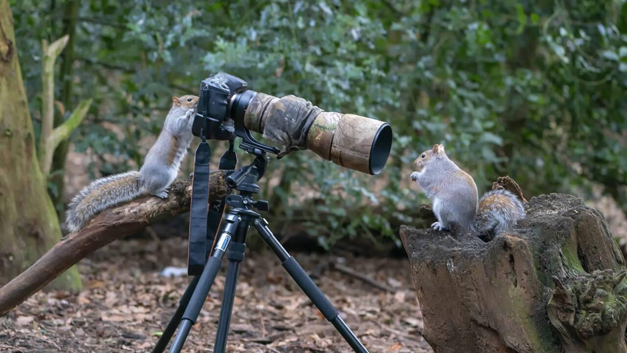 Découvrez les 15 photos d'animaux les plus drôles soumises aux Comedy Wildlife Photography Awards