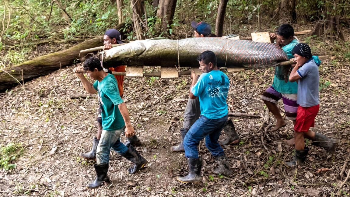 Au Brésil, la réserve Mamiraua, modèle de développement durable en Amazonie