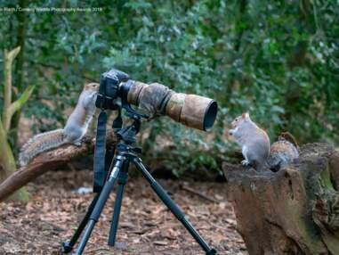 15 photos hilarantes d'animaux soumises au concours Comedy Wildlife Photography Awards