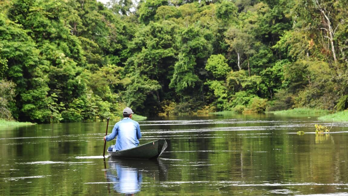 La biodiversité de l'Amazonie menacée par les coupes budgétaires