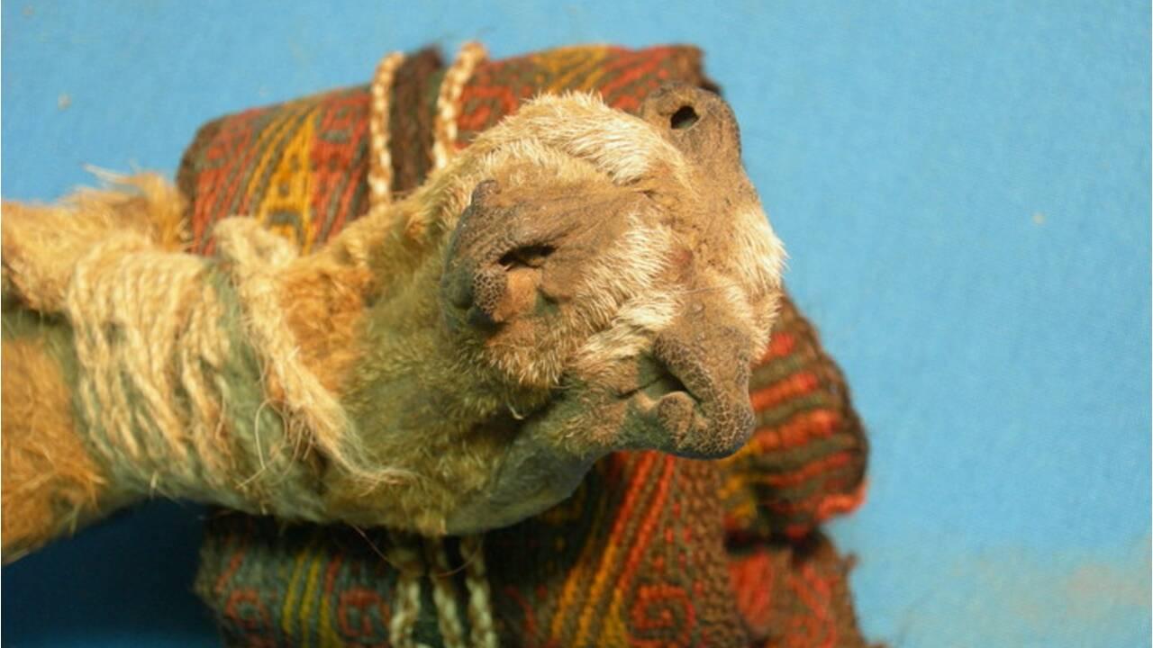 En Bolivie, des archéologues découvrent un stock de cocaïne et d'ayahuasca vieux de mille ans