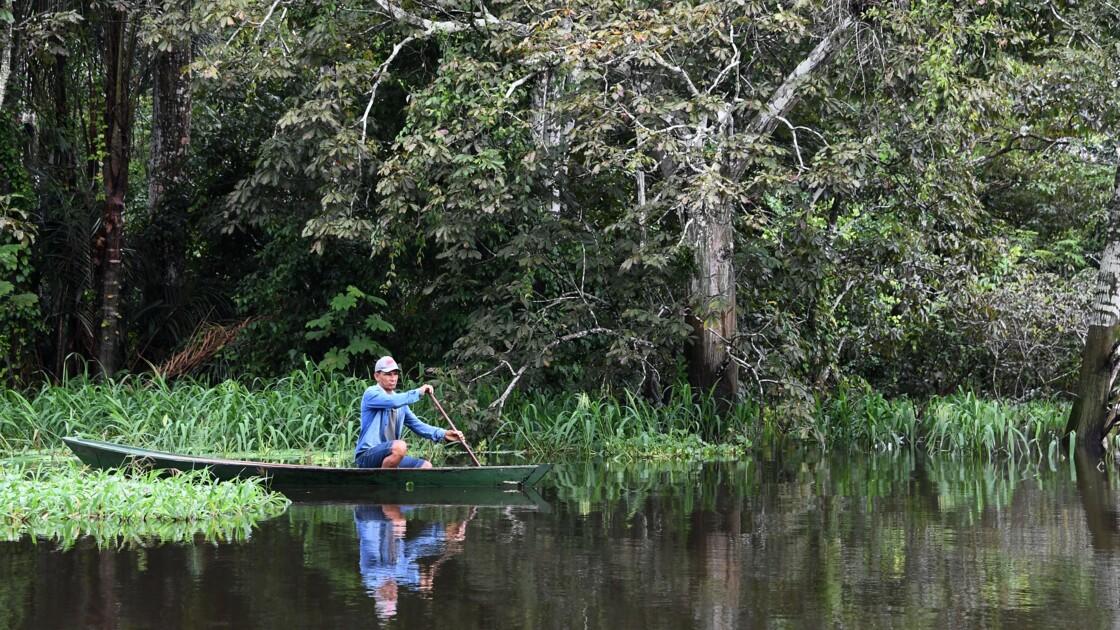 La survie miraculeuse du pirarucu, poisson géant d'Amazonie
