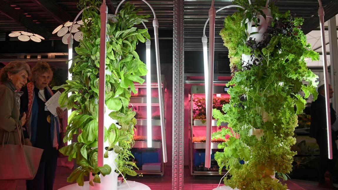Au Chelsea Flower Show, des jardins du futur face au changement climatique
