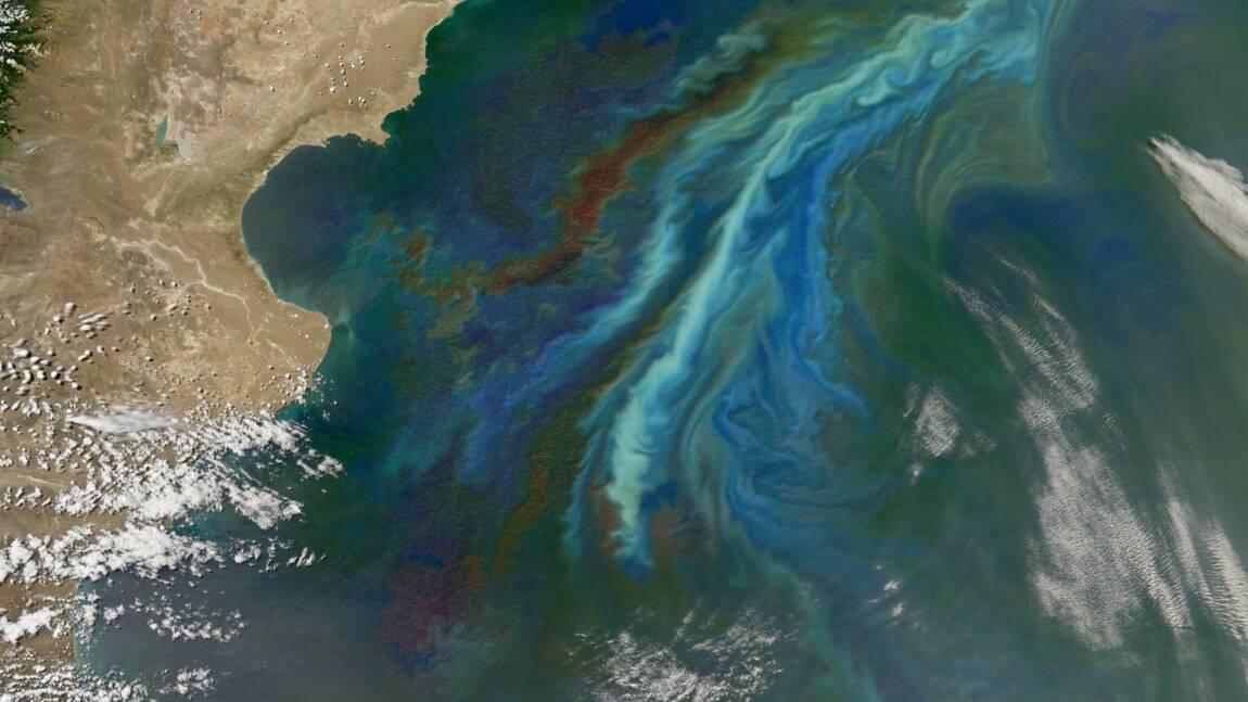 Avec le réchauffement, le plancton migre vers le nord