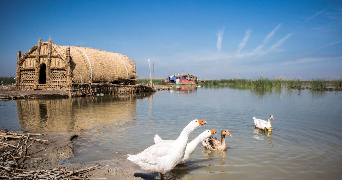 En Irak, les marais misent sur l'écotourisme pour redevenir un jardin d'Eden