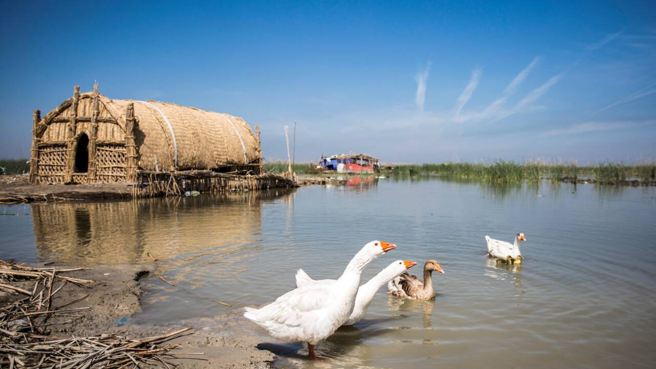 En Irak, les marais misent sur l'écotourisme pour redevenir jardin d'Eden