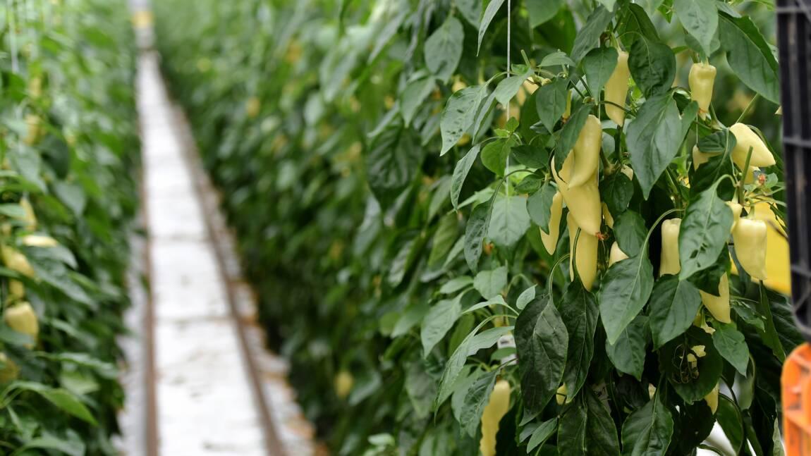 Agriculture: la Hongrie mise sur la PAC pour contrer les effets du réchauffement climatique