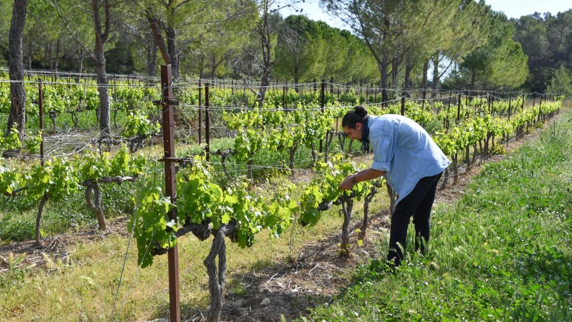 A Restinclières, les arbres protègent les cultures