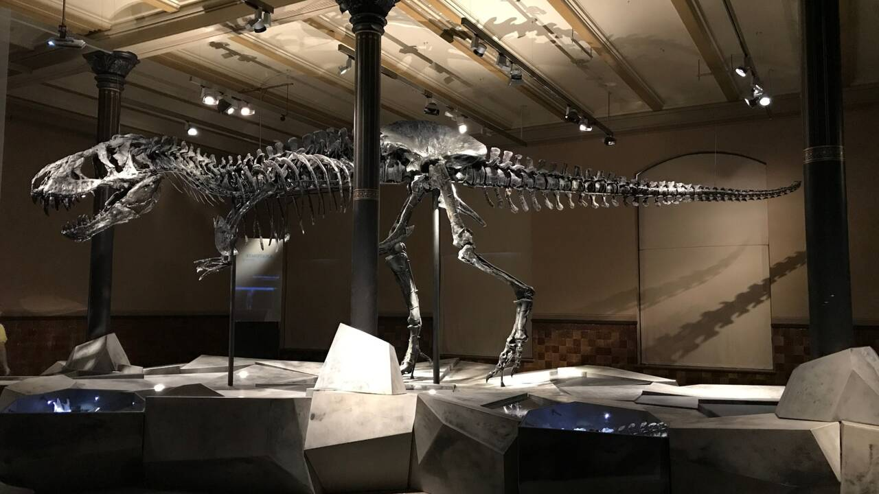 Le nouveau business des dinosaures vendus aux enchères