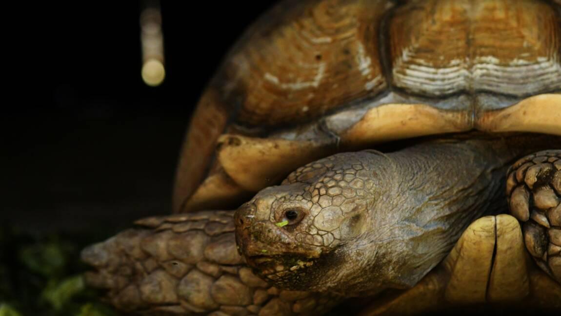 A Mayotte, un an ferme pour un braconnier, garde tortue du conseil départemental