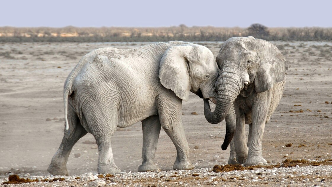 Taille, pelage, cerveau… L'impact du réchauffement climatique sur la morphologie des animaux